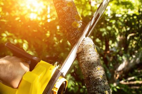 Abattage des arbres - Namur