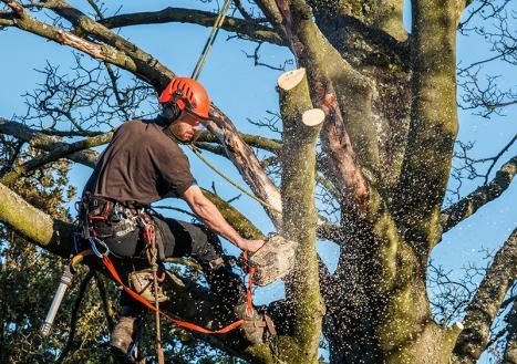 Abattage des arbres - Fernelmont